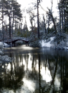 crimm dell in the winter